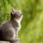 ¿Cuánto cuesta el seguro para un gato?