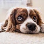 Seguros para Mascotas beemy.es | Mejores Comparadores
