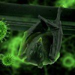 Diferencias entre una célula animal y una célula vegetal